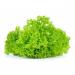 Λόλα Πράσινη