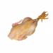Κόκορας Ελληνικός